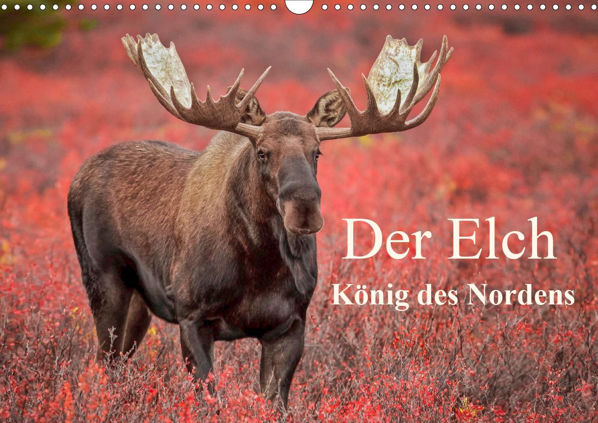 """Der Kalender """"Der Elch - König des Nordens"""""""
