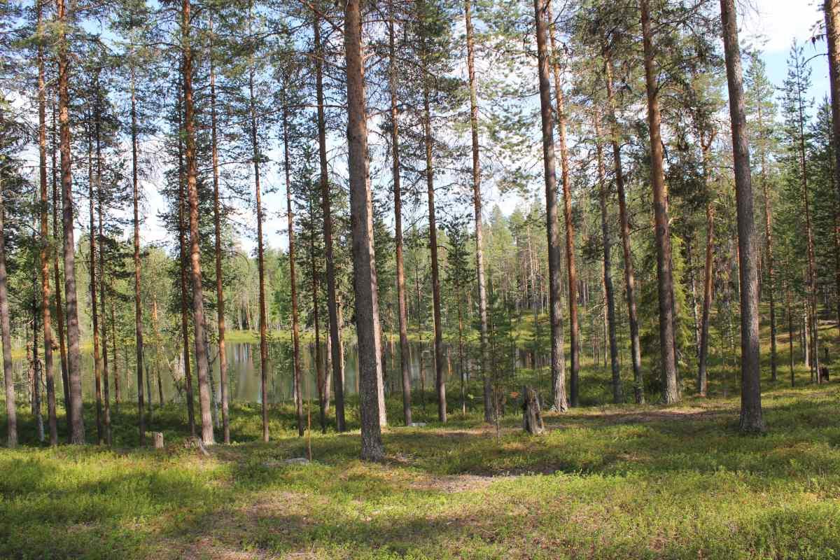 Wald Finnland